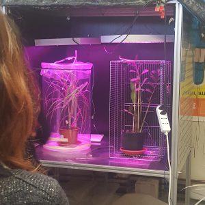 Testing plant signaling and behavior at the LINV