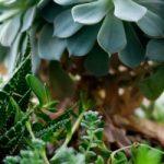 Tiny green garden