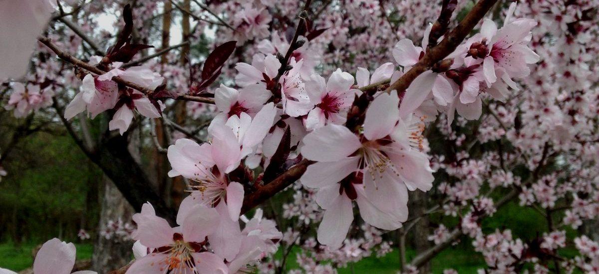Tigrilla Gardenia - Consultant - Blossoms