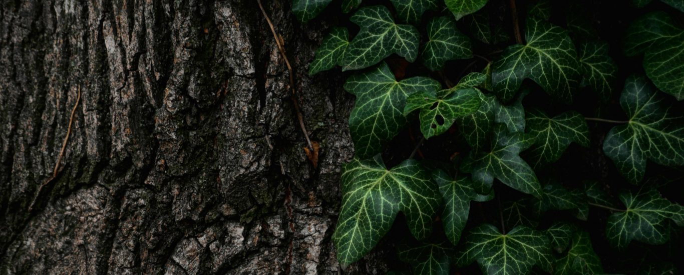 Are you giving too much or taking too much like this Ivy?