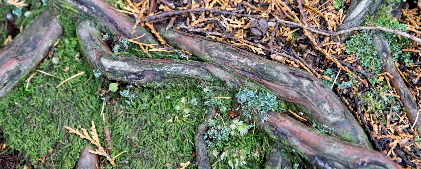 tree roots intertwined with moss and grass growing around, showing the benefits of differing relationships - as shown in nature