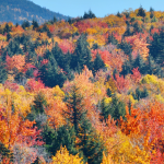 trees going through seasonal changes, growing and change with the seasons