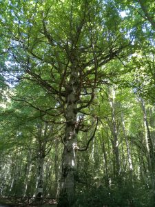 underneath the sanctuary-like canopy of a large forest tree