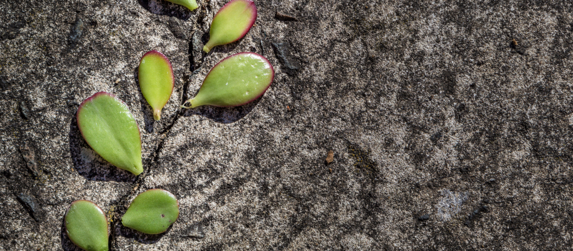 evolving-no-matter-what-comes-at-you-blog-post-tigrilla-gardenia